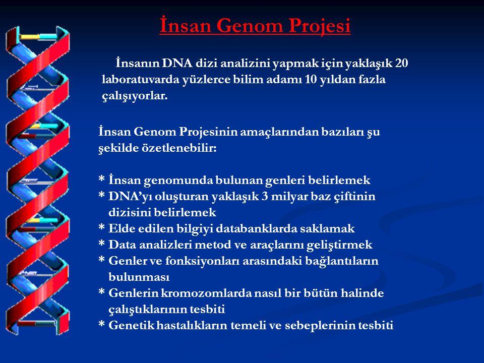 İnsan Genom Projesi İnsanın DNA dizi analizini yapmak için yaklaşık 20 laboratuvarda yüzlerce bilim adamı 10 yıldan fazla çalışıyorlar.