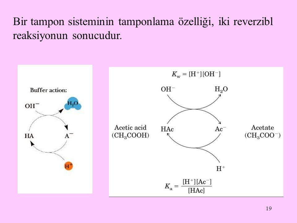 Bir tampon sisteminin tamponlama özelliği, iki reverzibl reaksiyonun sonucudur.