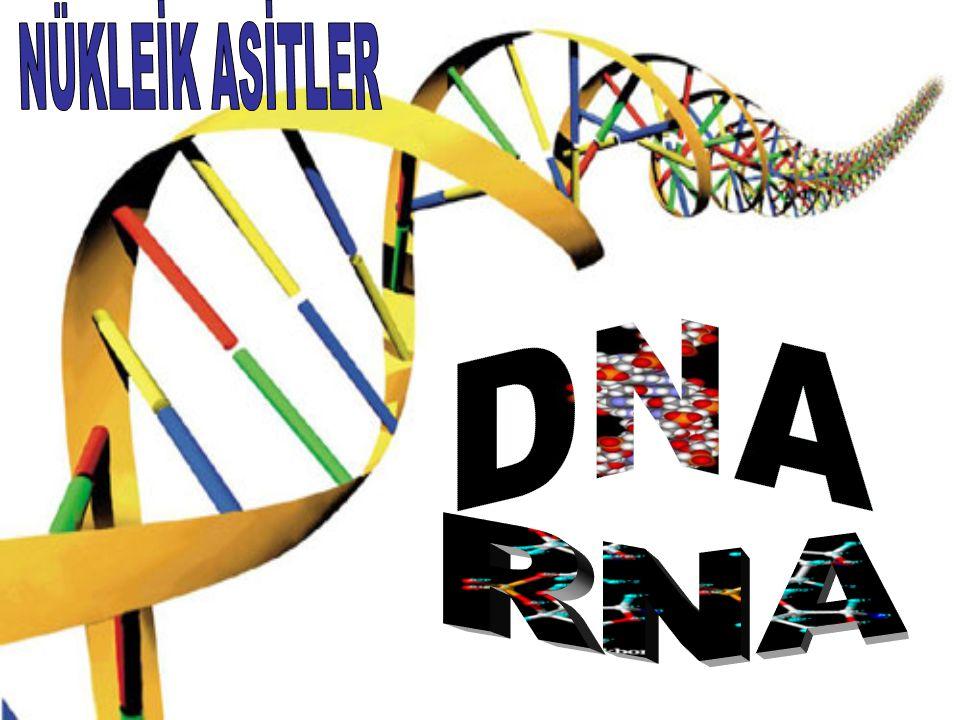 NÜKLEİK ASİTLER DNA RNA