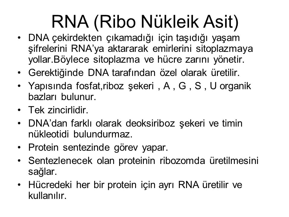 RNA (Ribo Nükleik Asit)
