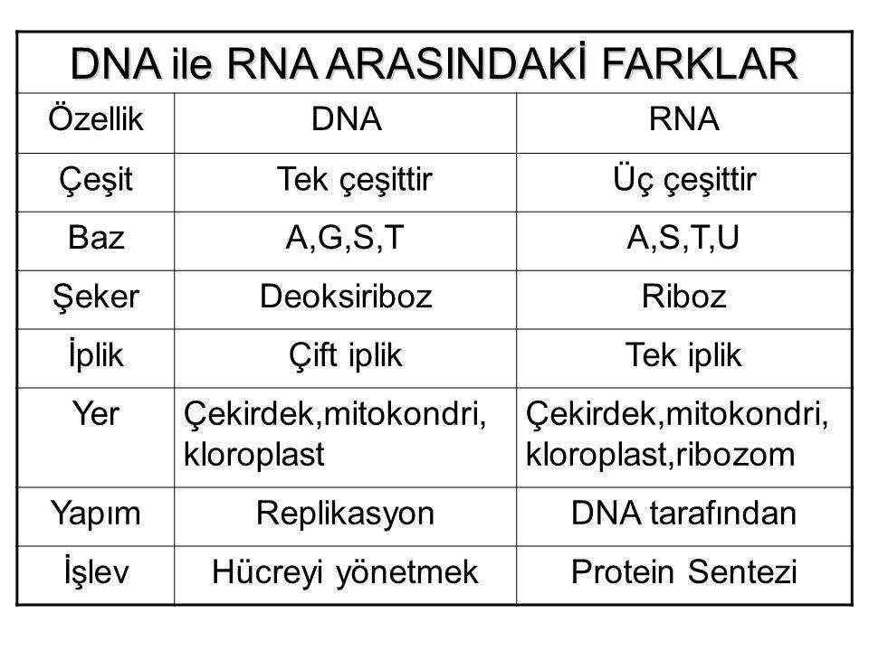 DNA ile RNA ARASINDAKİ FARKLAR