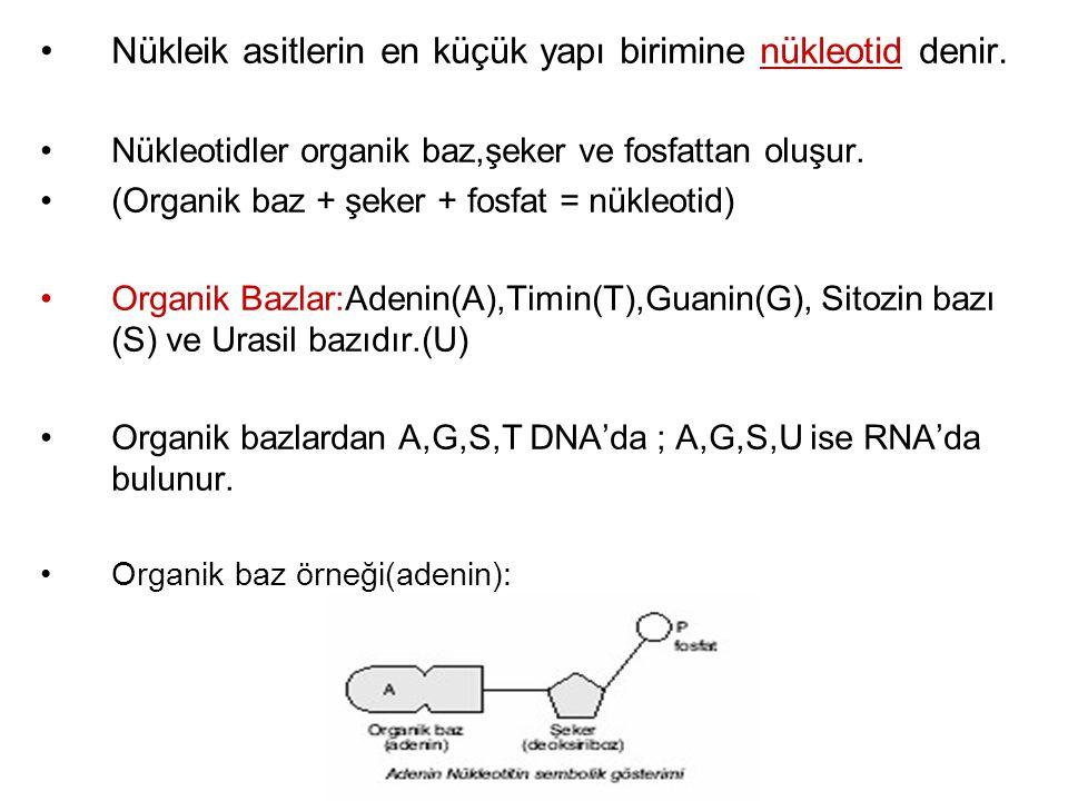 Nükleik asitlerin en küçük yapı birimine nükleotid denir.
