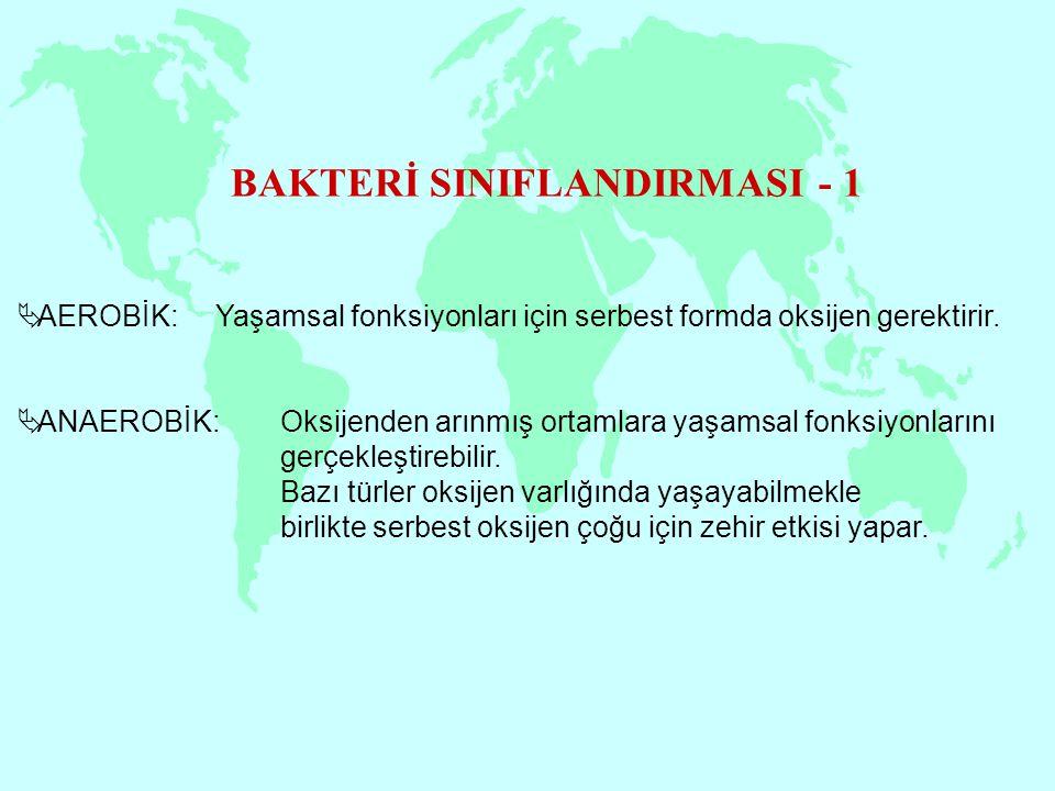 BAKTERİ SINIFLANDIRMASI - 1