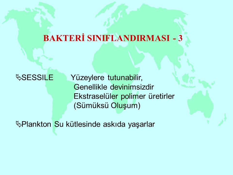 BAKTERİ SINIFLANDIRMASI - 3