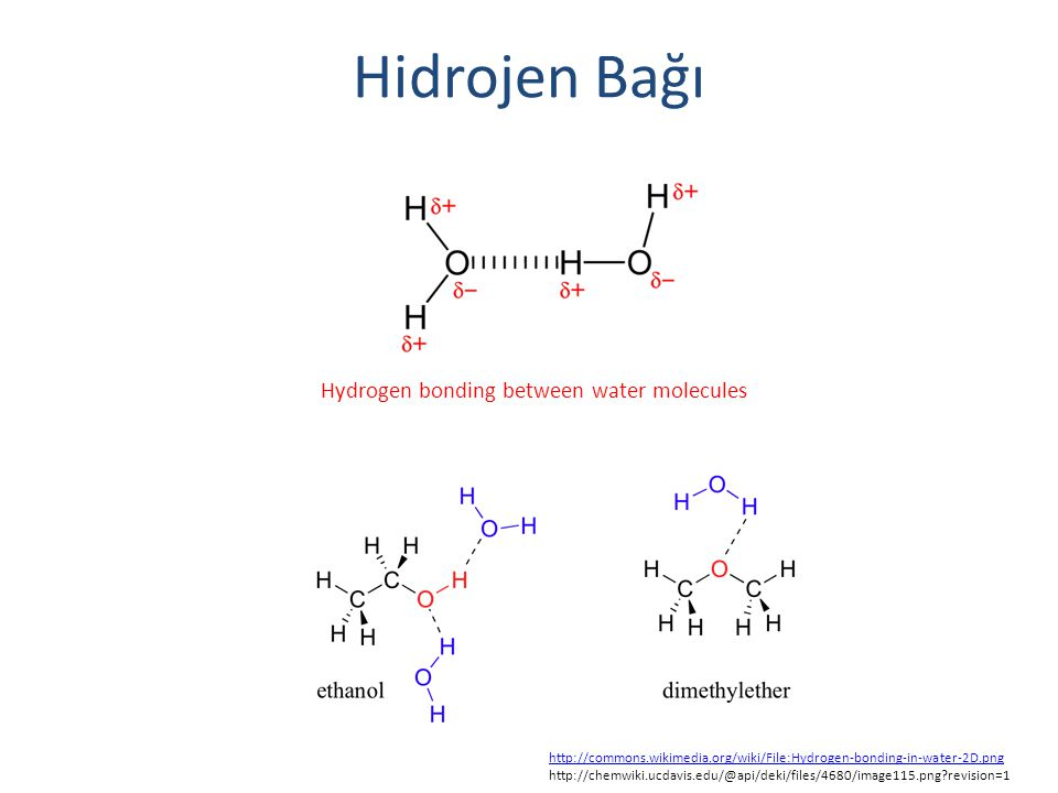 Hidrojen Bağı Hydrogen bonding between water molecules