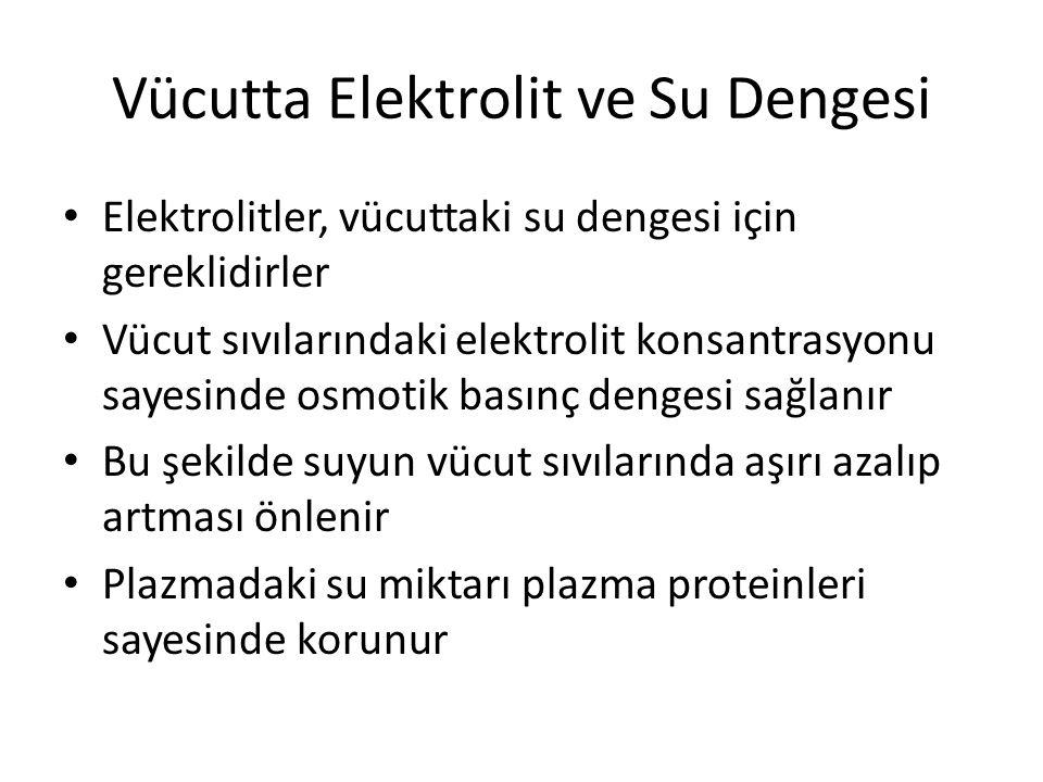 Vücutta Elektrolit ve Su Dengesi