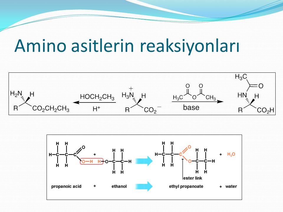 Amino asitlerin reaksiyonları