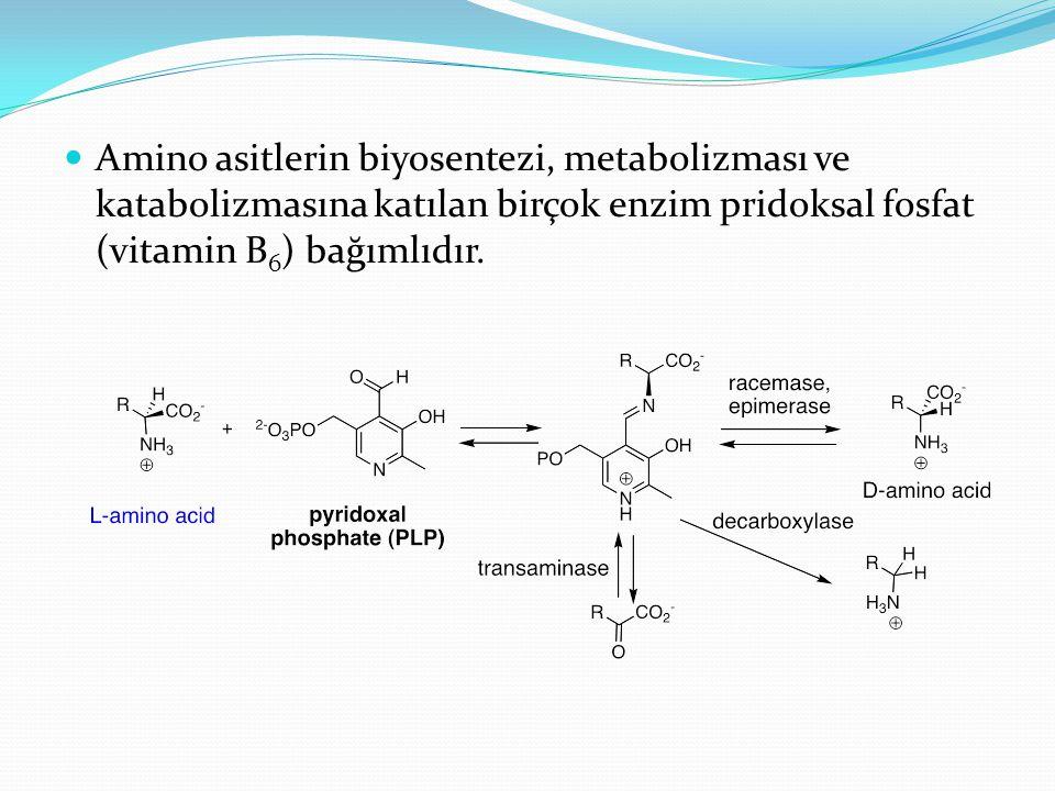 Amino asitlerin biyosentezi, metabolizması ve katabolizmasına katılan birçok enzim pridoksal fosfat (vitamin B6) bağımlıdır.