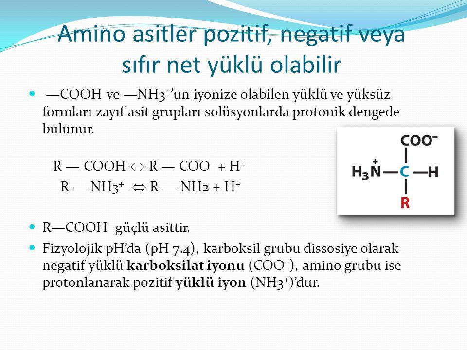 Amino asitler pozitif, negatif veya sıfır net yüklü olabilir