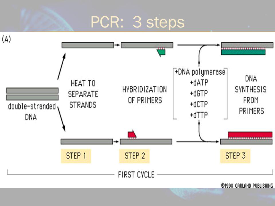 PCR: 3 steps