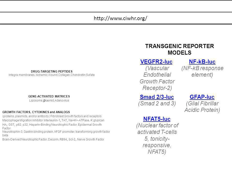 TRANSGENIC REPORTER MODELS