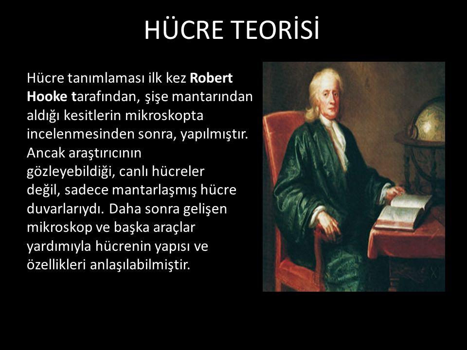 HÜCRE TEORİSİ