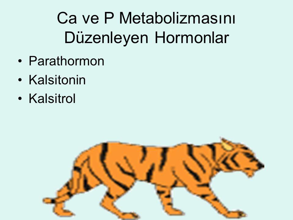 Ca ve P Metabolizmasını Düzenleyen Hormonlar