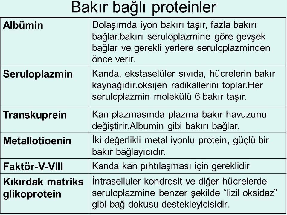 Bakır bağlı proteinler
