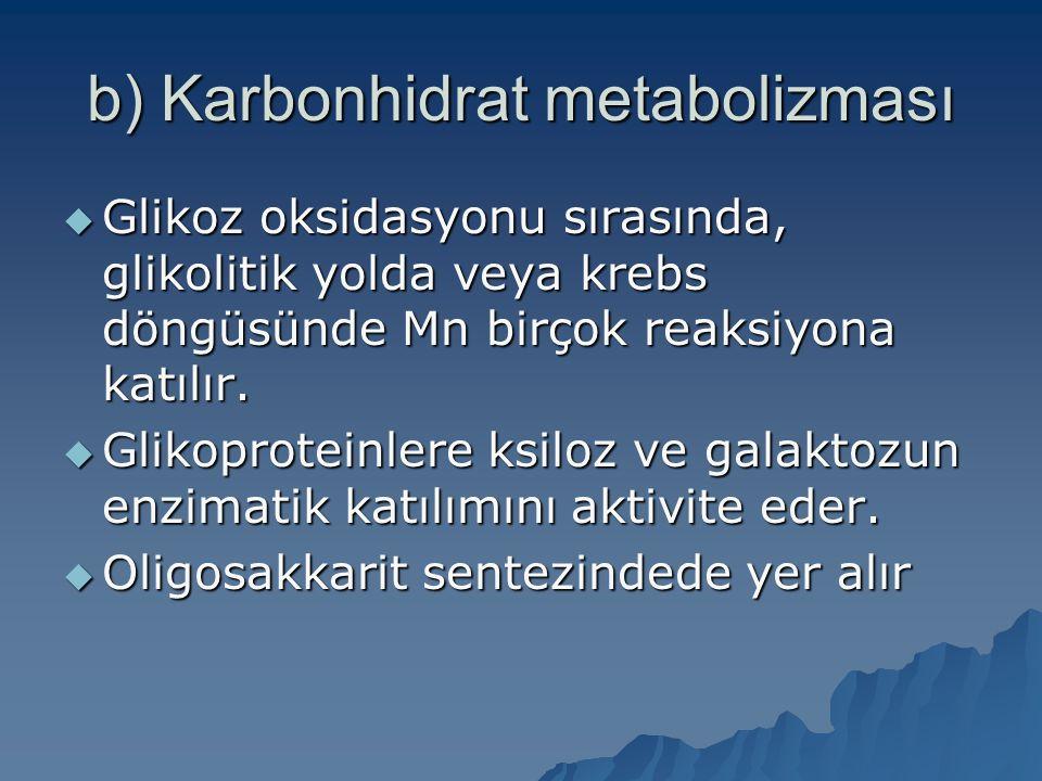 b) Karbonhidrat metabolizması