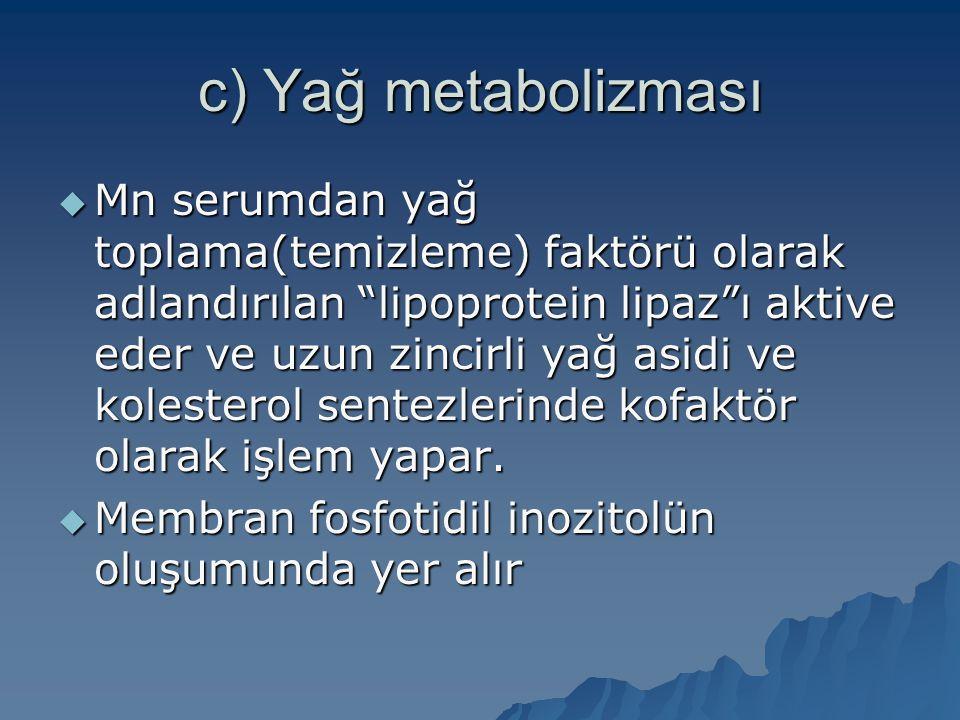 c) Yağ metabolizması