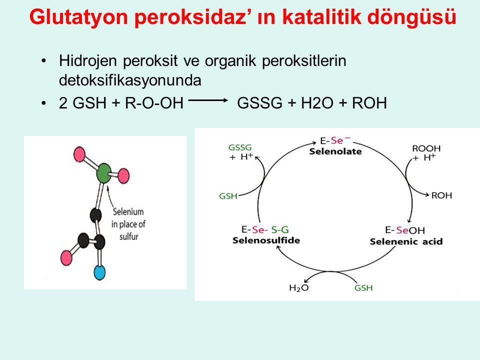 Glutatyon peroksidaz' ın katalitik döngüsü