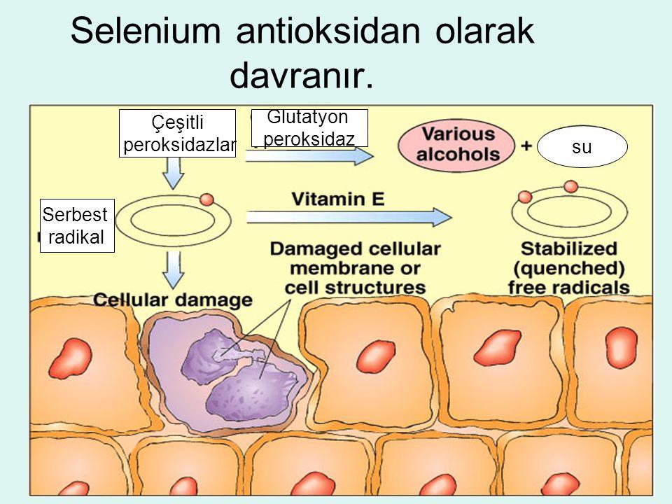 Selenium antioksidan olarak davranır.