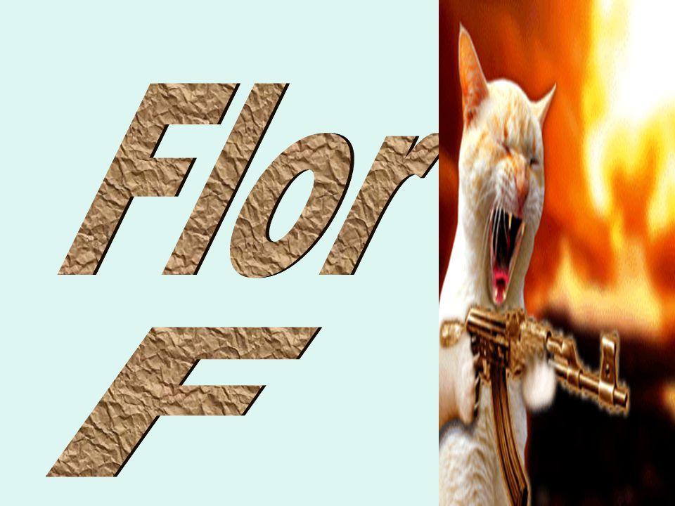 Flor F