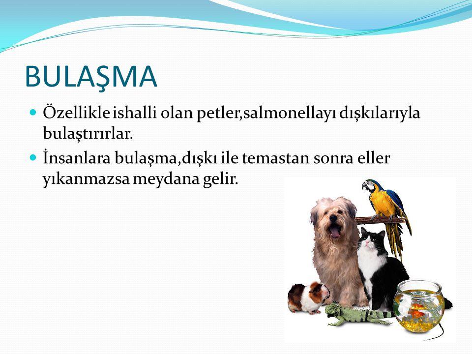 BULAŞMA Özellikle ishalli olan petler,salmonellayı dışkılarıyla bulaştırırlar.