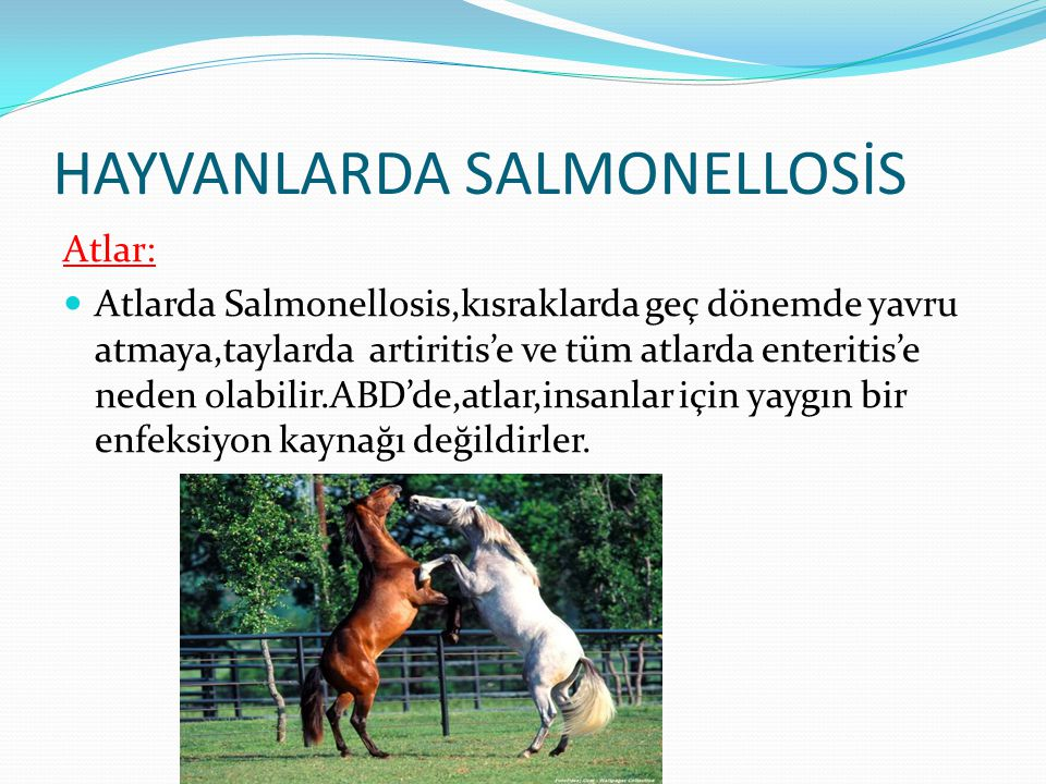 HAYVANLARDA SALMONELLOSİS