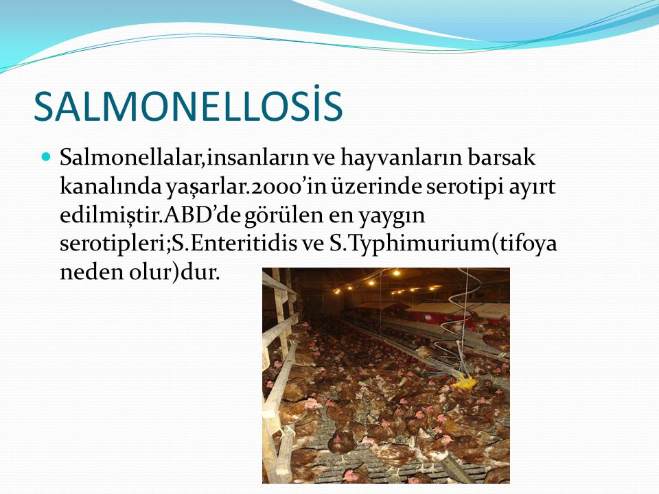 SALMONELLOSİS