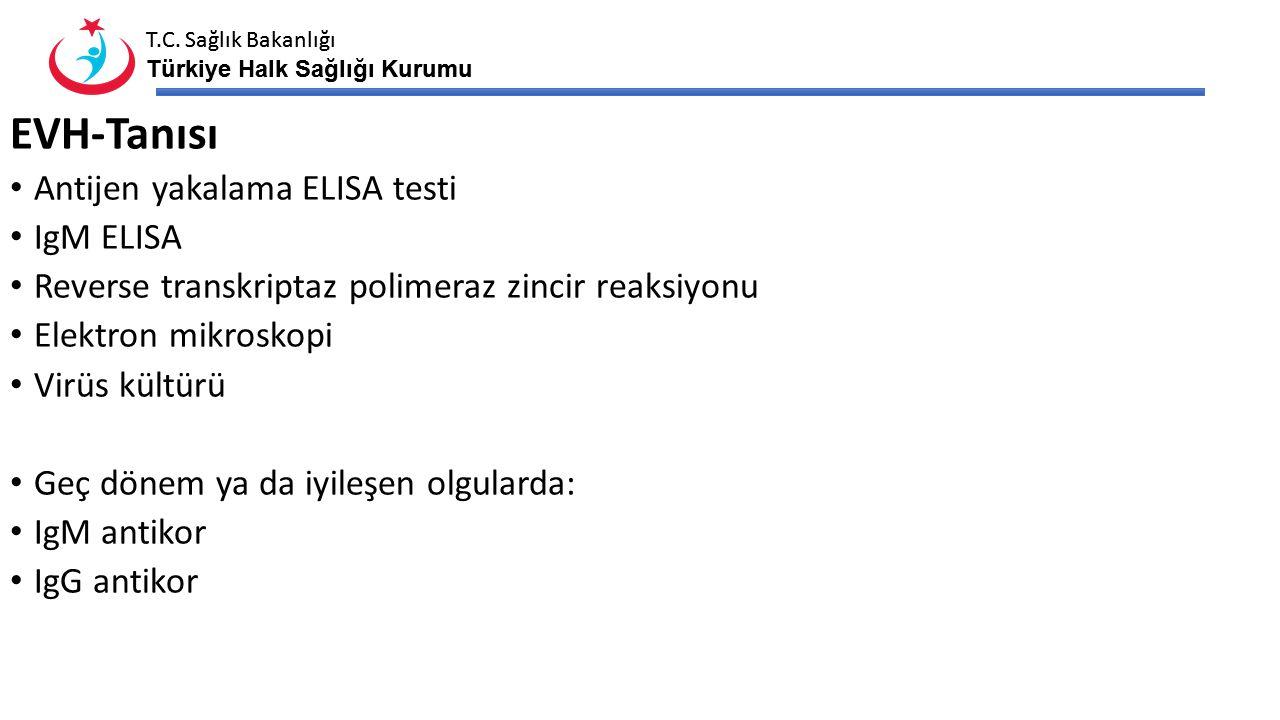 EVH-Tanısı Antijen yakalama ELISA testi IgM ELISA