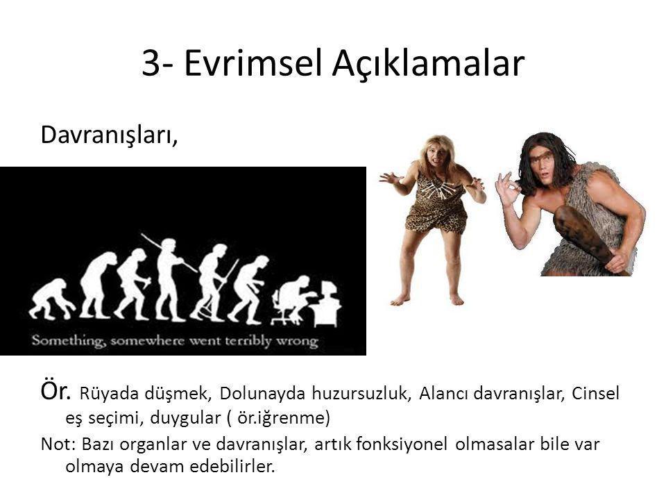 3- Evrimsel Açıklamalar