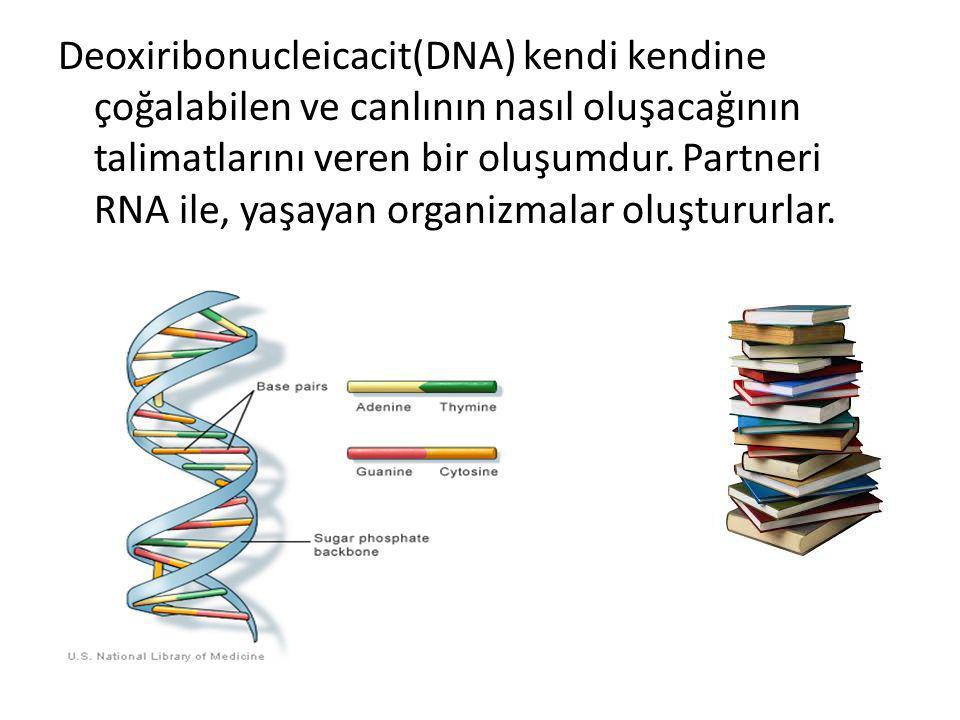 Deoxiribonucleicacit(DNA) kendi kendine çoğalabilen ve canlının nasıl oluşacağının talimatlarını veren bir oluşumdur.