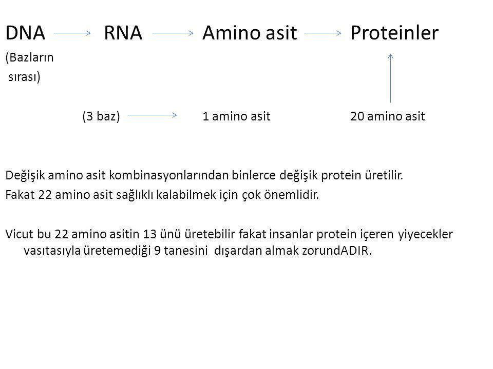 DNA RNA Amino asit Proteinler