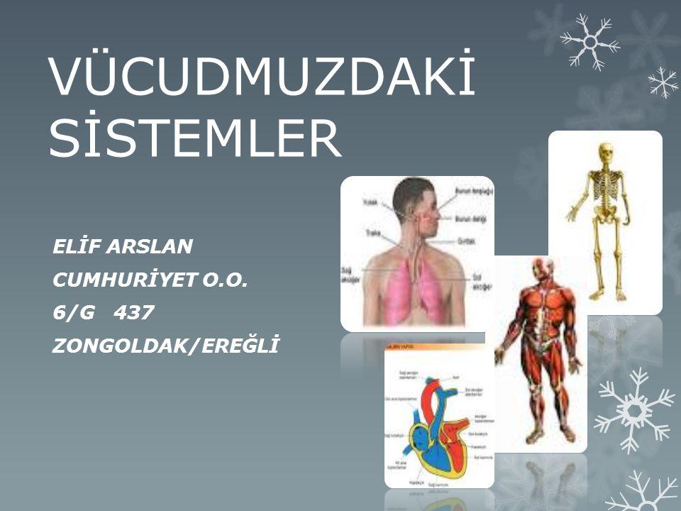 ELİF ARSLAN CUMHURİYET O.O. 6/G 437 ZONGOLDAK/EREĞLİ