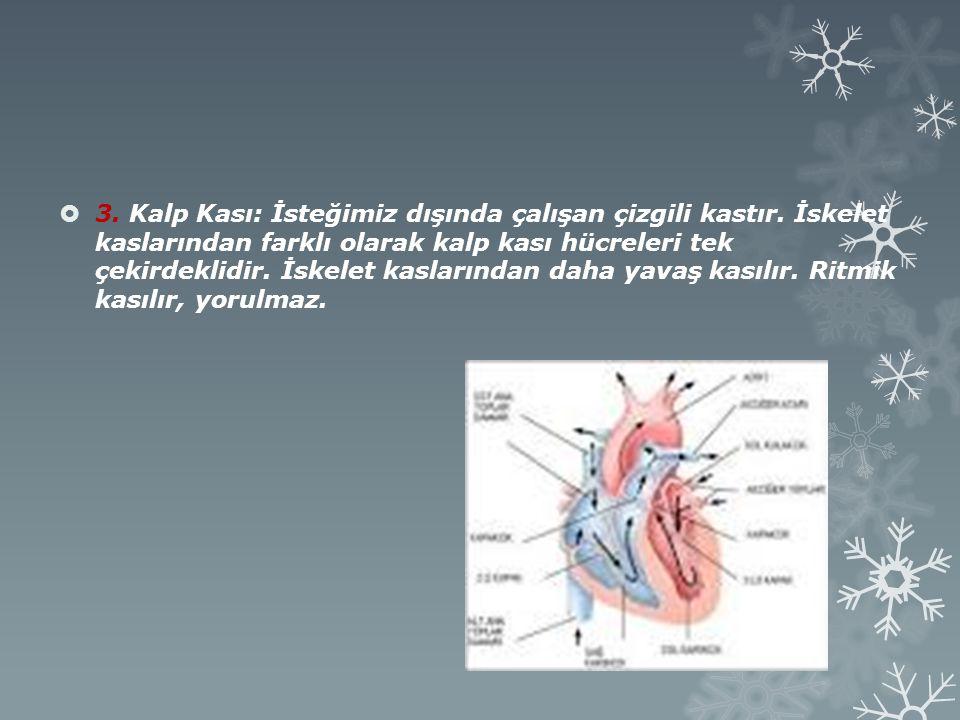 3. Kalp Kası: İsteğimiz dışında çalışan çizgili kastır