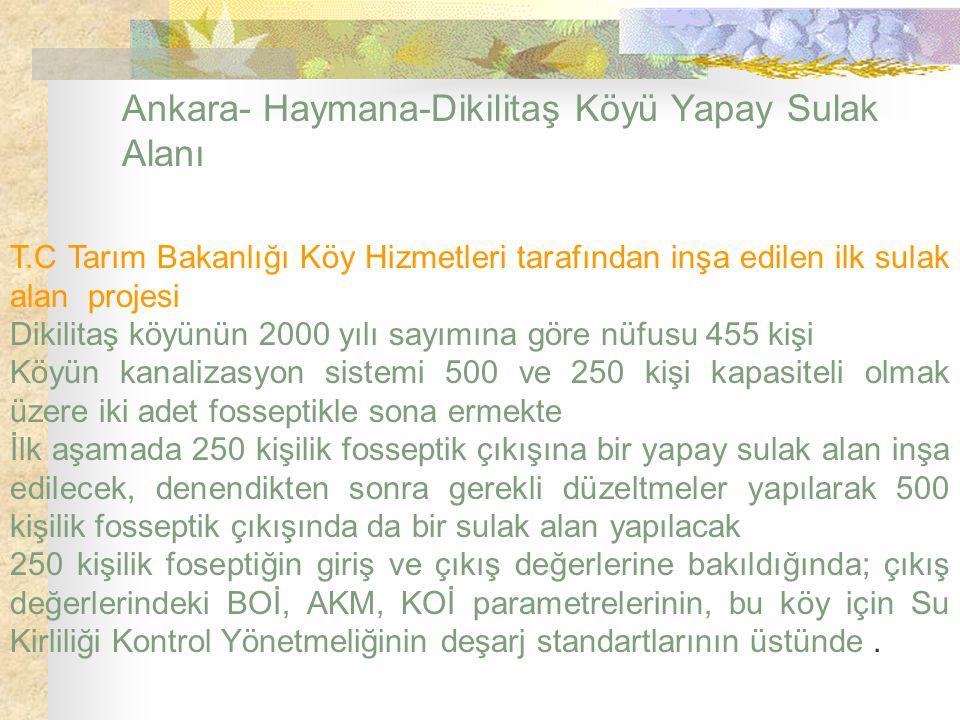 Ankara- Haymana-Dikilitaş Köyü Yapay Sulak Alanı