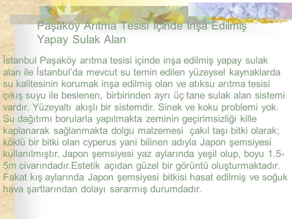 Paşaköy Arıtma Tesisi İçinde İnşa Edilmiş Yapay Sulak Alan