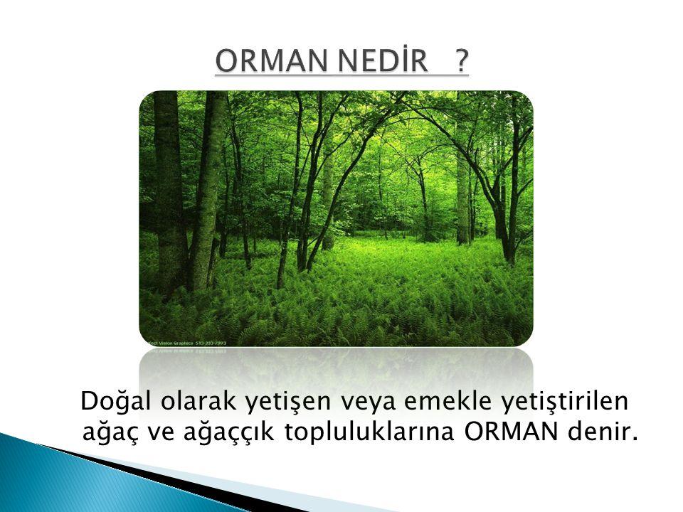 ORMAN NEDİR .