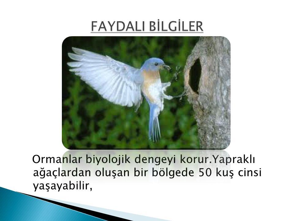 FAYDALI BİLGİLER Ormanlar biyolojik dengeyi korur.Yapraklı ağaçlardan oluşan bir bölgede 50 kuş cinsi yaşayabilir,