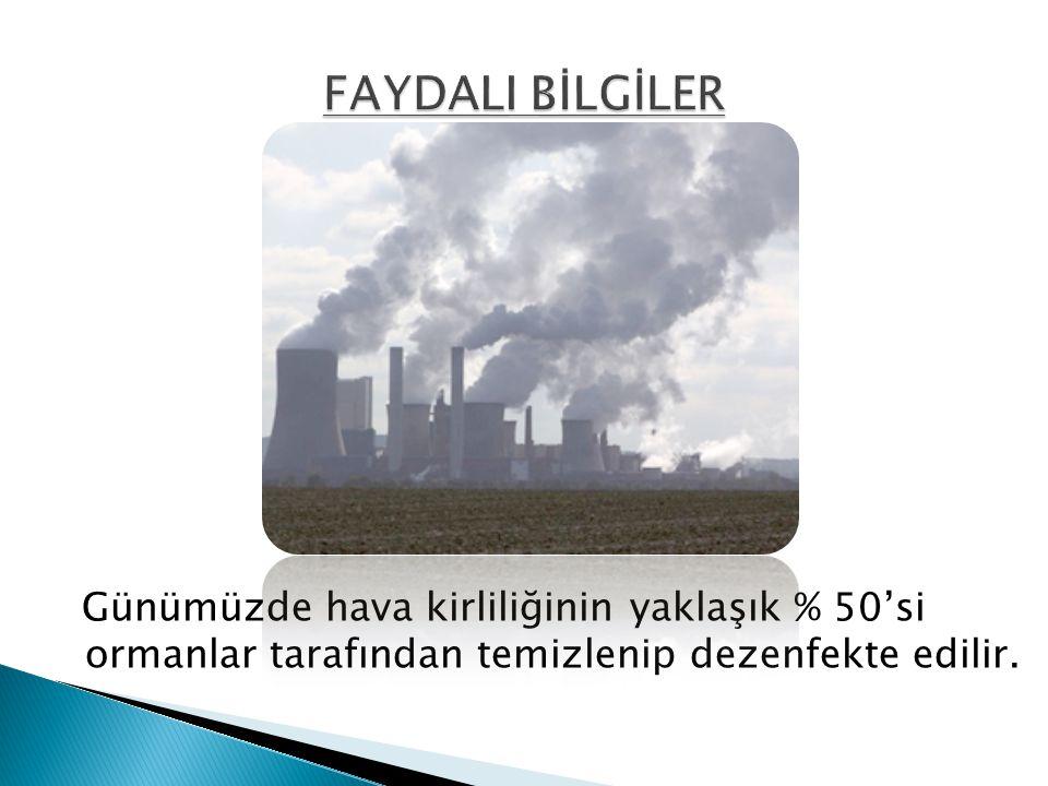 FAYDALI BİLGİLER Günümüzde hava kirliliğinin yaklaşık % 50'si ormanlar tarafından temizlenip dezenfekte edilir.