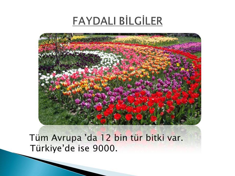 FAYDALI BİLGİLER Tüm Avrupa 'da 12 bin tür bitki var. Türkiye'de ise 9000.