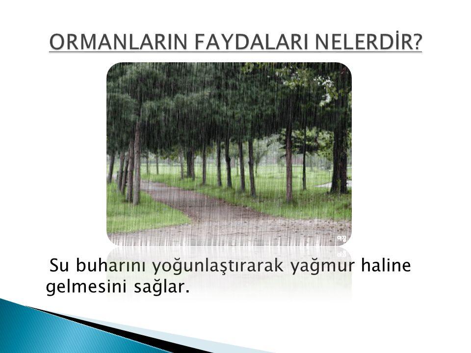 ORMANLARIN FAYDALARI NELERDİR