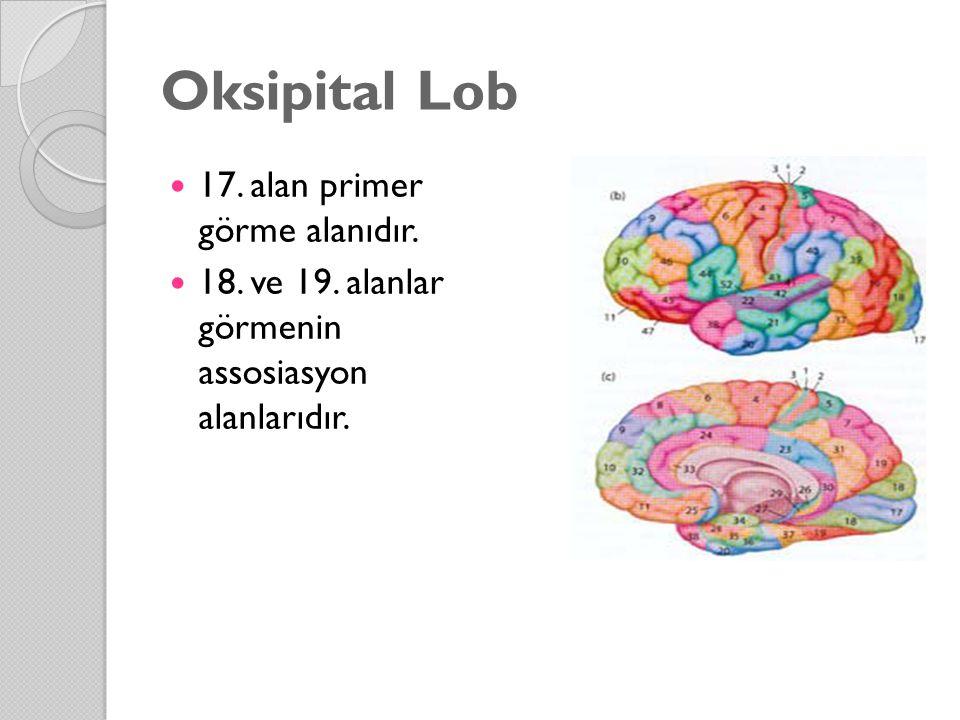 Oksipital Lob 17. alan primer görme alanıdır.