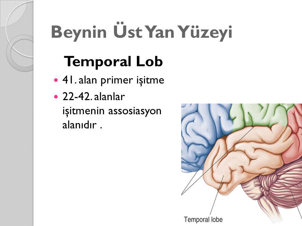 Beynin Üst Yan Yüzeyi Temporal Lob 41. alan primer işitme