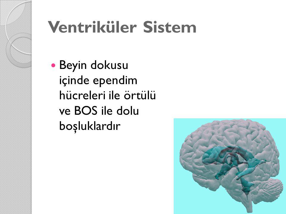 Ventriküler Sistem Beyin dokusu içinde ependim hücreleri ile örtülü ve BOS ile dolu boşluklardır.