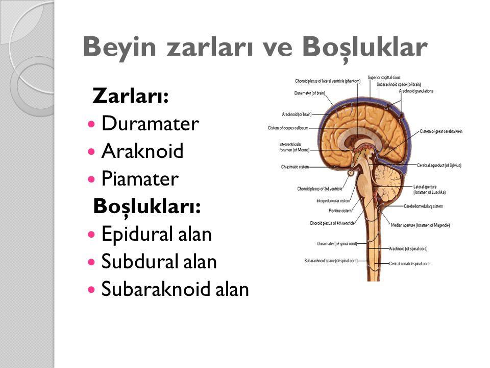 Beyin zarları ve Boşluklar