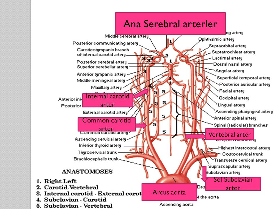 İnternal carotid arter