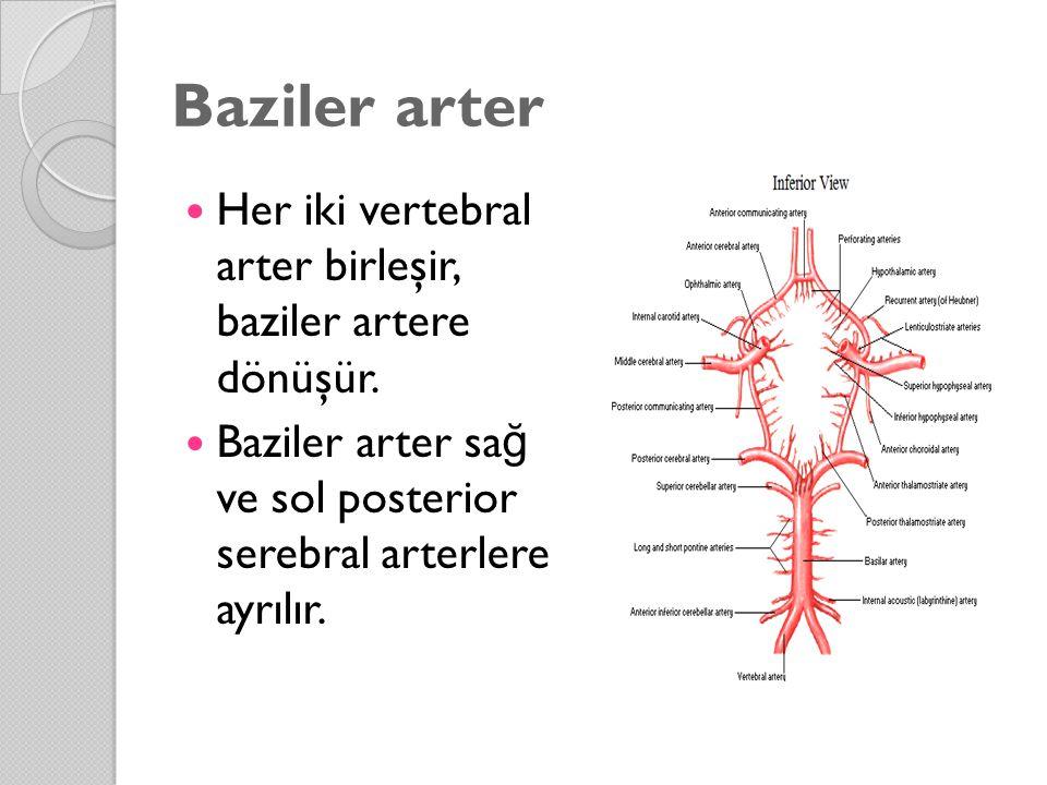 Baziler arter Her iki vertebral arter birleşir, baziler artere dönüşür. Baziler arter sağ ve sol posterior serebral arterlere ayrılır.