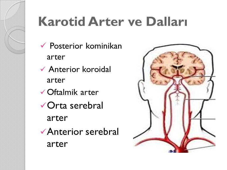 Karotid Arter ve Dalları