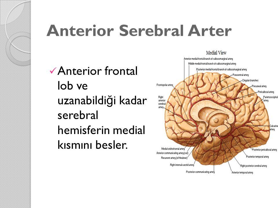 Anterior Serebral Arter