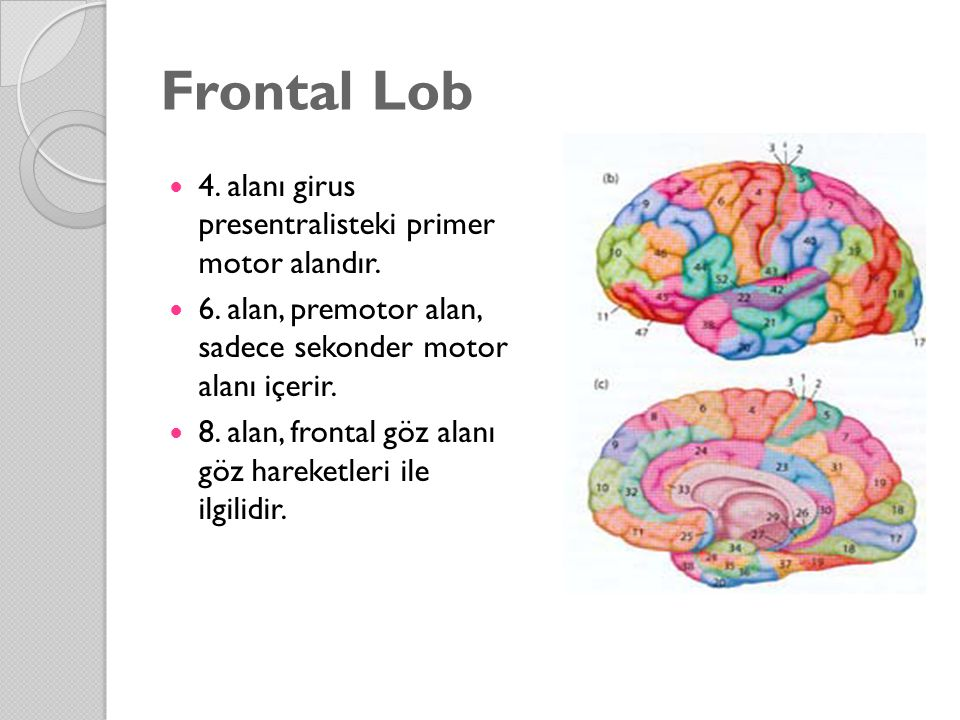 Frontal Lob 4. alanı girus presentralisteki primer motor alandır.