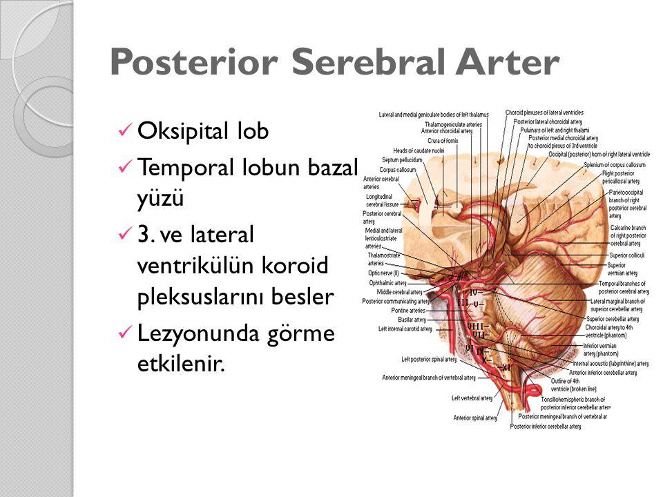 Posterior Serebral Arter
