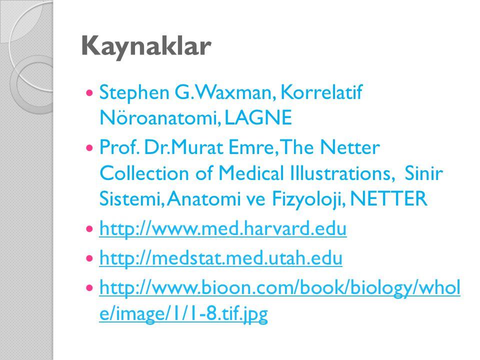 Kaynaklar Stephen G.Waxman, Korrelatif Nöroanatomi, LAGNE
